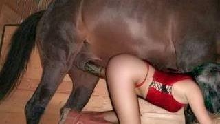 افلام بورن سكس حيوانات ساخنة بنت تنفرد بالحصان-بورن سكس حيوانات